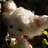 шарнирная кукла из фарфора, авторская кукла в Калининграде, bjd doll