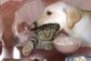 erdnussbarbie userpic