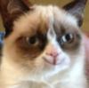 grumpy cat ))))
