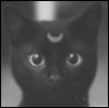 Кот с месяцем