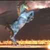 Денверский коняшка