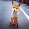 foxloveispain userpic