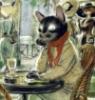 котик в кафе