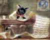 котик с манускриптом