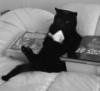 Perilous Queg: meow
