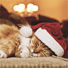 Nadine: [kitty] Christmas kitty