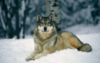 wolfnman userpic