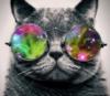 Психоделический кот