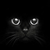 black_cat_18_dark