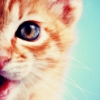 cat: eye