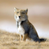 fox, shopped, not, apathy
