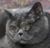 кот - учёный