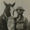 конный, horse, пресс-служба, лошади