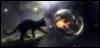 mstotenkinder: Black kitty
