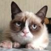 grumpy-nice