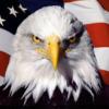 белоголовый орлан анфас