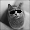 Googles Cat