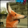 fox_traveler userpic