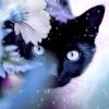 ЛЕТО: Одичавшая Кошка