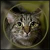 katty_kat userpic
