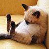 kenaru userpic