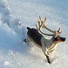 inkvoices: reindeer