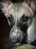 vita_pro: пёс
