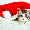 Holiday // kitten