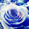 Frust-sheep: misc: rose-beautiful blue