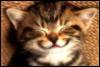 кот, полосатик, улыбка