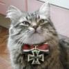 platinum_cat userpic