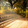 anemone_cottage userpic