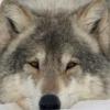 kamork userpic