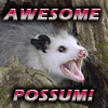 Rose Cat: possum