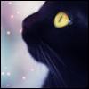 black cat stars