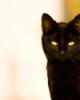 yelloweyedcat userpic