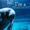 mary anne.: message : SAVE THE MANATEES!