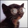 Nazz88: coolcat