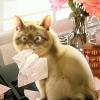 cat-writer