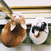 Протуберанец: коты