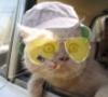 кот джоннии
