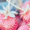 misc; strawberries.