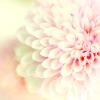 petal_abstract userpic