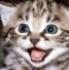 Кот смеется