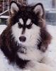 velvets48 userpic