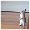 Bunny Standing