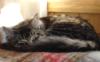 rw_kitten