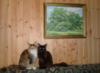 ta_shenka: У-дачные котики