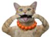 lexus_cat