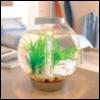 aquaworks userpic